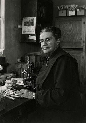Johanna Westerdijk - Westerdijk (c.1948)