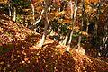 Jojakkoji Kyoto01s3s4592.jpg