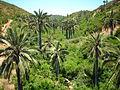 Jubaea chilensis Quebrada El Quiteño 2.jpg