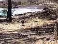 Kahului-Wailuku, HI, HI, USA - panoramio (3).jpg