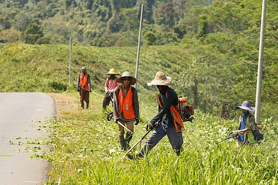 Kalabakan Sabah Weeding-at-Kalabakan-Sapulut-Road-01.jpg
