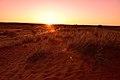 Kalahari landscape, Kalahari, Northern Cape, South Africa (20516666236).jpg