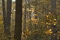 Kampinos Forest - panoramio.jpg