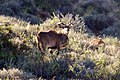 Karoo National Park 2014 50.jpg