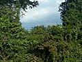 Kasokwa Forest 04.jpg
