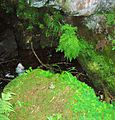 Kingen Cleugh Glen - Haugh mill lade tunnel.JPG