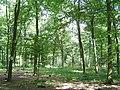 Kings Wood - geograph.org.uk - 48102.jpg
