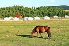 Koń mongolski w Parku Narodowym Gorchi-Tereldż 07.JPG