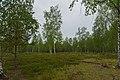 Koenigsbruecker Heide 05.jpg