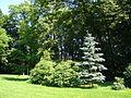 Kostelecký zámecký park (26).JPG