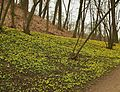 Kostelecký zámecký park (68).jpg
