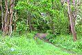 Kreis Pinneberg, Naturschutzgebiet Liether Kalkgrube 09.jpg