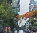 Krishnachura, Rain and Rickshaws (27065483221).jpg