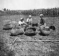 Krompir prebirajo na njivi, Virant, Rožnik 1948.jpg