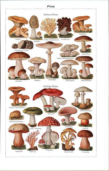 http://upload.wikimedia.org/wikipedia/commons/thumb/d/d0/LA2-Blitz-0309.jpg/383px-LA2-Blitz-0309.jpg