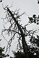 LSG Sudmerberg - Bäume (7).jpg