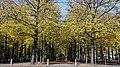 LVoorhout.DH.Nov.2012a.jpg
