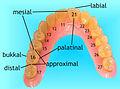 Lage- und Verhältnisbestimmung Zahn.jpg