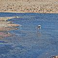 Laguna Chaxa-CTJ-IMG 5870.jpg