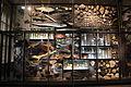 Laika ac Museum für Naturkunde (10994695413).jpg