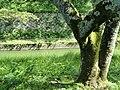 Lake Biwa Canal, Otsu - DSC07034.JPG