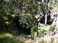 Lake Cave @ Margaret River (4449824299).jpg