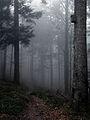 Landschaftsschutzgebiet Schauinsland.JPG