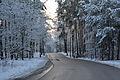 Las Bialoleka Dworska Waluszewska zima.jpg