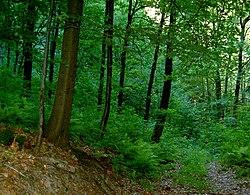 løvskov