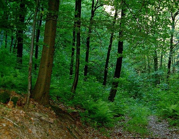 Lövskog i sydöstra Tyskland.