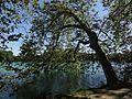 Le lac - Parc de la Tête d'Or (Lyon).JPG