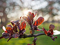 Leaves against sunshine (13042390764).jpg
