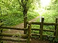 Leaving Bunny Old Wood - geograph.org.uk - 1335539.jpg