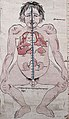 Left figure art detail, from- Three anatomical figures from Tibet Wellcome V0036134 (cropped).jpg