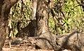 Leopard Gir.jpg