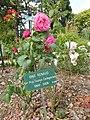 "Les roses "" line renaud "" au jardin du thabor - panoramio.jpg"