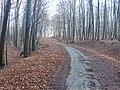 Lesná cesta - panoramio (5).jpg