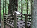 Lewis and Clark State Park (Washington); Douglas Fir (6111601876).jpg