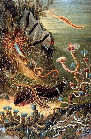 "Mesozoic marine revolution - ""A variety of marine worms"": plate from Das Meer by M. J. Schleiden (1804–1881)."