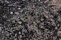 Lichen (38769367250).jpg