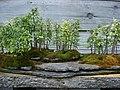 Little Trees (183449961).jpg