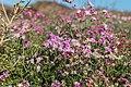 Lobos Island February 2016-9251 - panoramio.jpg