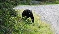 Local Wildlife (522808844).jpg