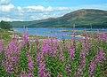 Loch Doon View - geograph.org.uk - 898816.jpg