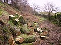 Log Pile - geograph.org.uk - 348452.jpg