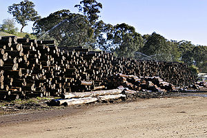 Yarra Ranges National Park - Logged Mountain Ash trees at a Woodmill.