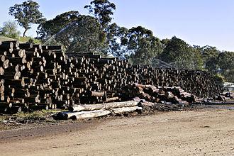 Eucalyptus regnans - Eucalyptus regnans logs at a woodmill