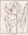 Lotus page 1698.jpg