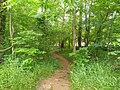Lower Haw River Trail 1.jpg