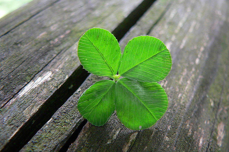 File:Luck is... (explored).jpg